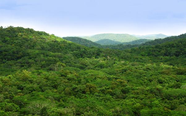 selva-rbkk